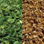 Moringa Leaf Lovers Bundle